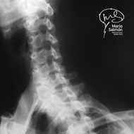 Oblique Normal left X-ray